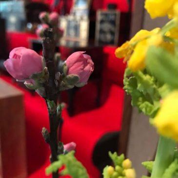 3月の営業日と焙りたてコーヒー教室とお雛様展示のお知らせ
